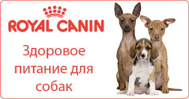 �������� ������� ��� ����� Royal Canin